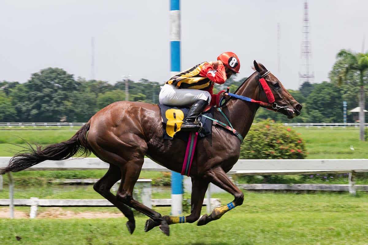 race horse jockey jumping hurdle